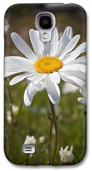 Kelley King Galaxy S4 Cases - Daisy 1 Galaxy S4 Case by Kelley King