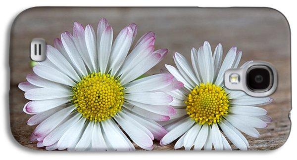 Yellow Photographs Galaxy S4 Cases - Daisy Flowers Galaxy S4 Case by Nailia Schwarz