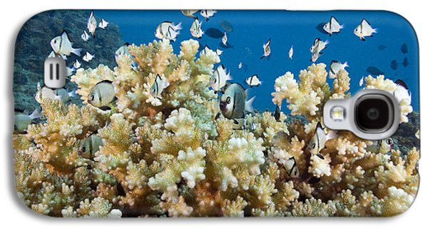 Humbug Galaxy S4 Cases - Damselfish Among Coral Galaxy S4 Case by Dave Fleetham - Printscapes