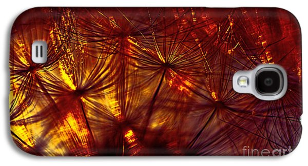 Abstract Nature Galaxy S4 Cases - Dandelion Autumn Glow by Kaye Menner Galaxy S4 Case by Kaye Menner
