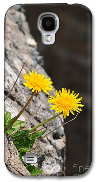 Catherine Reusch Daley Galaxy S4 Cases - Dandelion Galaxy S4 Case by Catherine Reusch  Daley