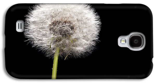 Studio Photographs Galaxy S4 Cases - Dandelion Seedhead Galaxy S4 Case by Steve Gadomski