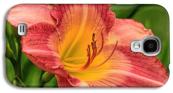 Botanical Galaxy S4 Cases - Day Lily  Galaxy S4 Case by Geraldine Scull