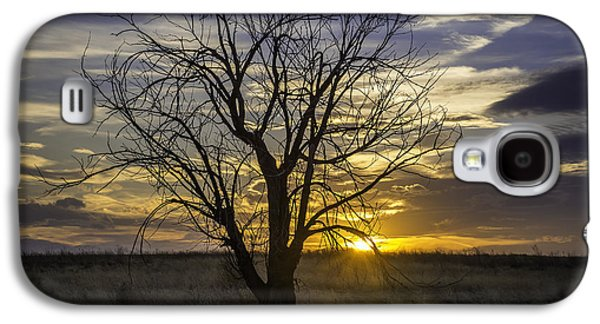Fort Collins Galaxy S4 Cases - Dead Tree at Sunset Galaxy S4 Case by Trish Kusal