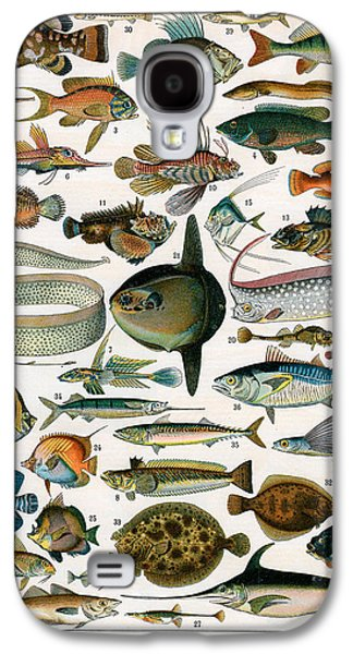 Aquatic Drawings Galaxy S4 Cases - Decorative Print of Poissons by Demoulin Galaxy S4 Case by American School