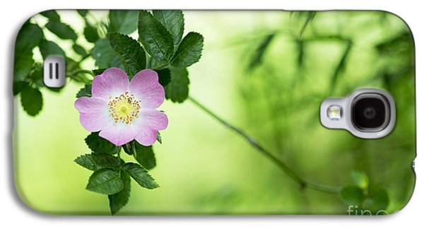 Rosaceae Galaxy S4 Cases - Delicate Dog Rose Galaxy S4 Case by Tim Gainey