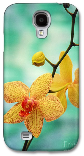 Printscapes - Galaxy S4 Cases - Dendrobium Galaxy S4 Case by Allan Seiden - Printscapes