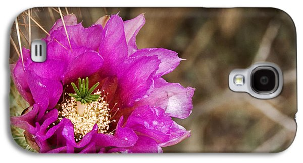 The Nature Center Galaxy S4 Cases - Desert Bloom Galaxy S4 Case by Anthony Citro