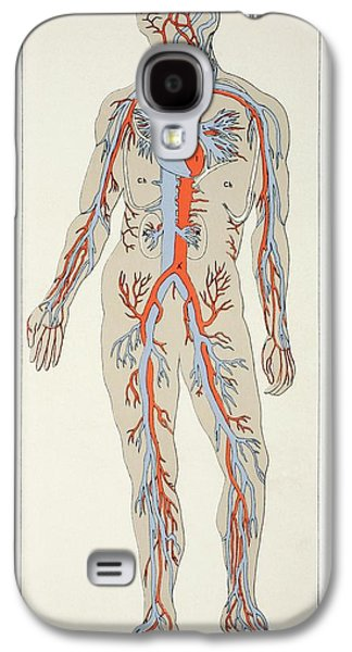 Blood Drawings Galaxy S4 Cases - Distribution Of Blood Vessels In The Galaxy S4 Case by Vintage Design Pics