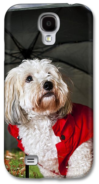 Coton Galaxy S4 Cases - Dog under umbrella Galaxy S4 Case by Elena Elisseeva