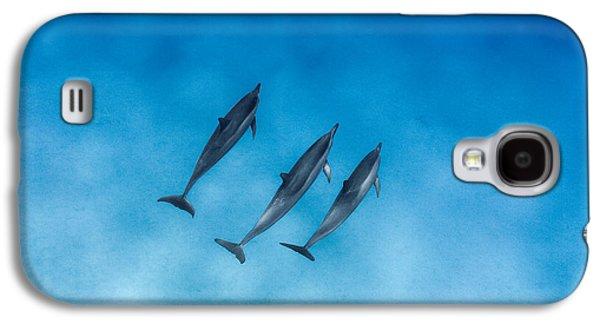 Dolphin Trio Galaxy S4 Case by Sean Davey