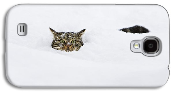 Animals and Earth - Galaxy S4 Cases - Domestic Cat Felis Catus In Deep Snow Galaxy S4 Case by Konrad Wothe
