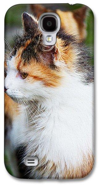 Digital Galaxy S4 Cases - Domestic cat Galaxy S4 Case by Queso Espinosa