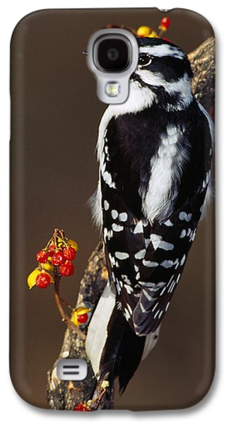 Downy Woodpecker On Tree Branch Galaxy S4 Case by Panoramic Images