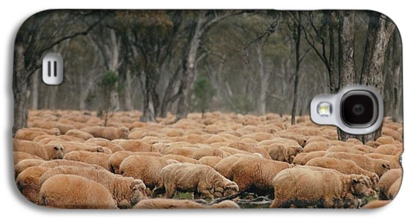 Vicki Ferrari Photography Photographs Galaxy S4 Cases - Droving Sheep  at Albert Australia Galaxy S4 Case by Vicki Ferrari