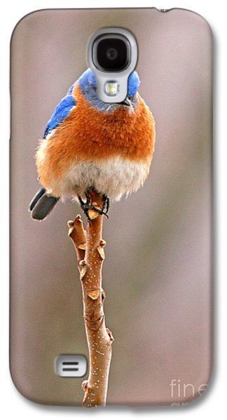 Winter Trees Photographs Galaxy S4 Cases - Eastern Bluebird Treetop Perch Galaxy S4 Case by Max Allen