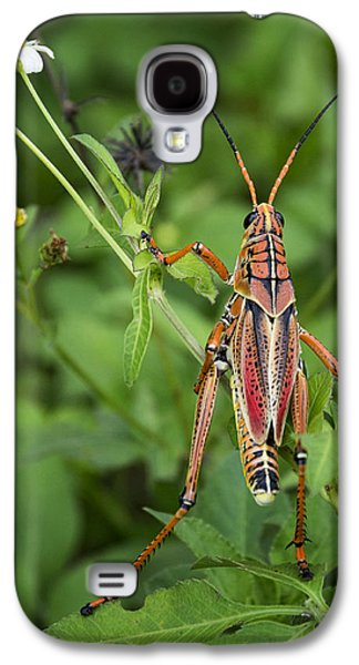 Eastern Lubber Grasshopper  Galaxy S4 Case by Saija  Lehtonen