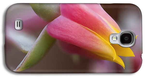 Echeveria Elegans Galaxy S4 Case by Frank Fullard