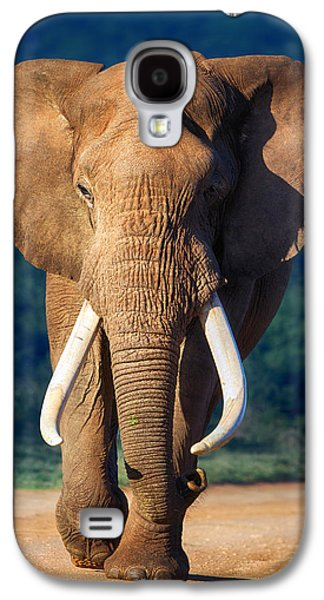 Green Galaxy S4 Cases - Elephant approaching Galaxy S4 Case by Johan Swanepoel