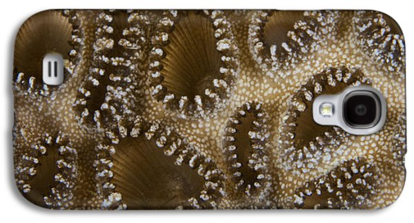 Undersea Photography Galaxy S4 Cases - Extreme Close-up Of A Crust Anemone Galaxy S4 Case by Terry Moore