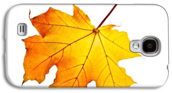 Fall Maple Leaf Galaxy S4 Case by Elena Elisseeva