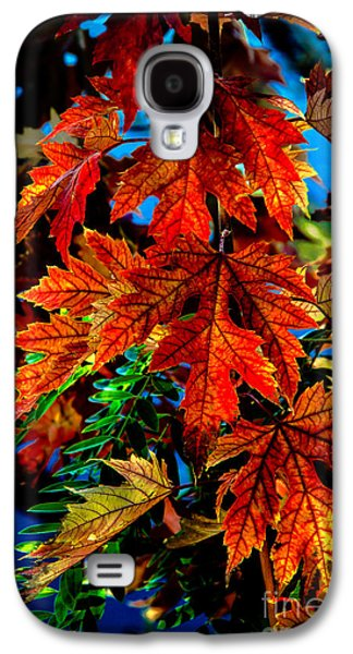 Haybale Photographs Galaxy S4 Cases - Fall Reds Galaxy S4 Case by Robert Bales
