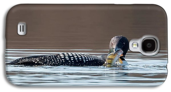 Loon Galaxy S4 Cases - Feeding Common Loon Square Galaxy S4 Case by Bill Wakeley
