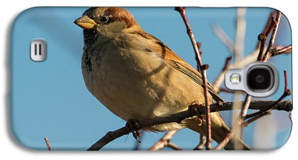 Female House Sparrow Galaxy S4 Case by Mike Dawson