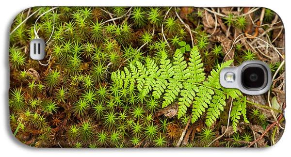Nature Abstract Galaxy S4 Cases - Fern 1 Galaxy S4 Case by Joye Ardyn Durham