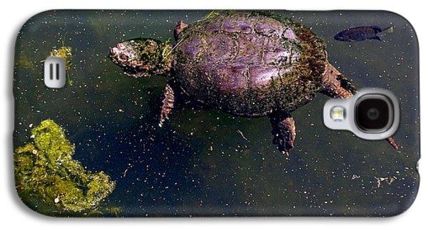 Alga Galaxy S4 Cases - Floating Turtle Galaxy S4 Case by Ed Weidman