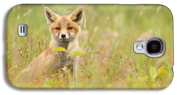 Fox Kit Galaxy S4 Cases - Fox Kit in the Filed Galaxy S4 Case by Roeselien Raimond