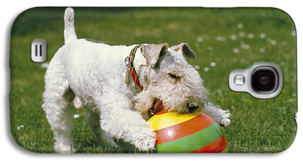 Fox Terrier With Ball Galaxy S4 Case by Frederick Ayer III