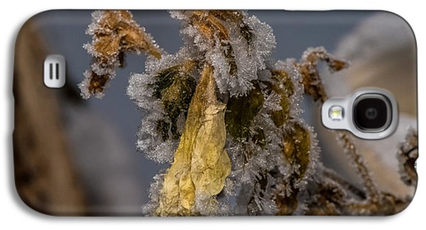 Frosted Rose Galaxy S4 Case by Paul Freidlund