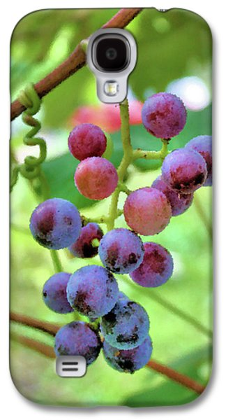 Concord Grapes Galaxy S4 Cases - Fruit of the Vine Galaxy S4 Case by Kristin Elmquist