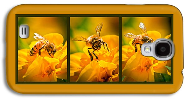 Pollinate Galaxy S4 Cases - Gathering Pollen Triptych Galaxy S4 Case by Bob Orsillo