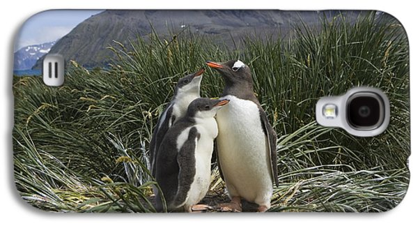 Three Chicks Galaxy S4 Cases - Gentoo Penguin and Young Chicks Galaxy S4 Case by Suzi Eszterhas