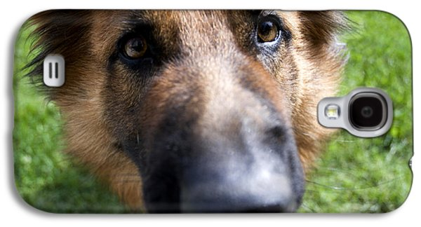 German Shepherd Galaxy S4 Cases - German Shepherd dog Galaxy S4 Case by Fabrizio Troiani