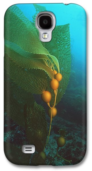 Alga Galaxy S4 Cases - Giant Kelp Galaxy S4 Case by Georgette Douwma