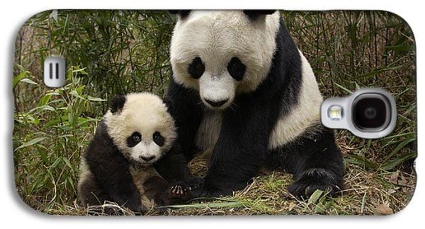 The Nature Center Galaxy S4 Cases - Giant Panda Ailuropoda Melanoleuca Galaxy S4 Case by Katherine Feng
