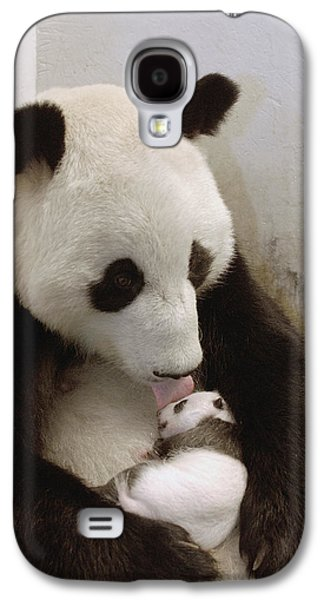 The Nature Center Galaxy S4 Cases - Giant Panda Ailuropoda Melanoleuca Xi Galaxy S4 Case by Katherine Feng