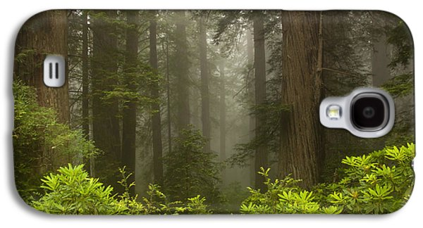 Rhododendron Galaxy S4 Cases - Giants in the Mist Galaxy S4 Case by Mike  Dawson