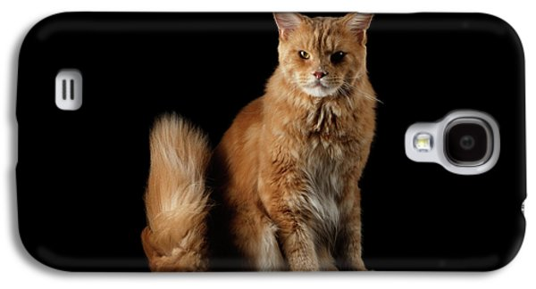 Ginger Maine Coon Cat Isolated On Black Background Galaxy S4 Case by Sergey Taran