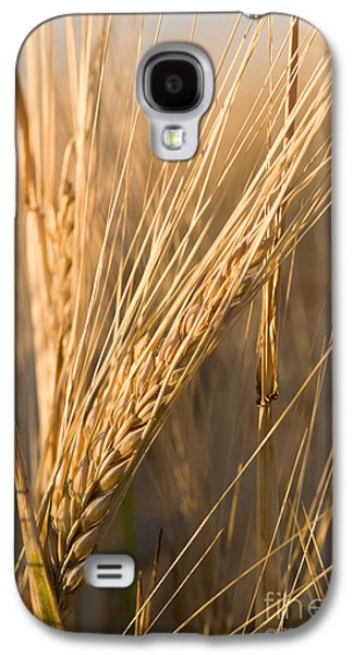 Daydreams Photographs Galaxy S4 Cases - Golden Grain Galaxy S4 Case by Cindy Singleton