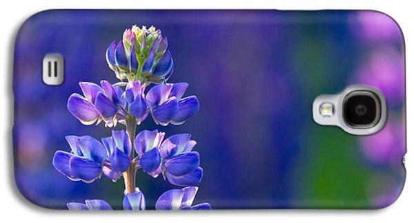 Mary Amerman Photographs Galaxy S4 Cases - Golden Hour Lupine Galaxy S4 Case by Mary Amerman