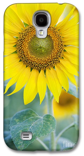 Golden Sunflower Galaxy S4 Case by Tim Gainey