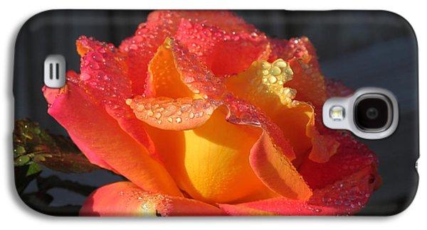 Sun Galaxy S4 Cases - Golden Treasure Rose Galaxy S4 Case by Rumyana Whitcher