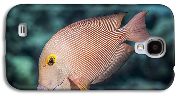 Undersea Photography Galaxy S4 Cases - Goldring Surgeonfish  Ctenochaetus Galaxy S4 Case by Thomas Kline