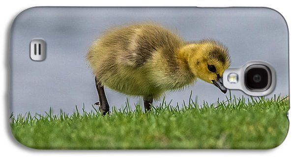 Young Birds Galaxy S4 Cases - Gosling Hunting  Galaxy S4 Case by Paul Freidlund