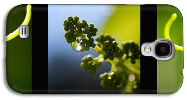 Abstract Nature Galaxy S4 Cases - Grape Vines and Water Drops Triptych Galaxy S4 Case by Lisa Knechtel