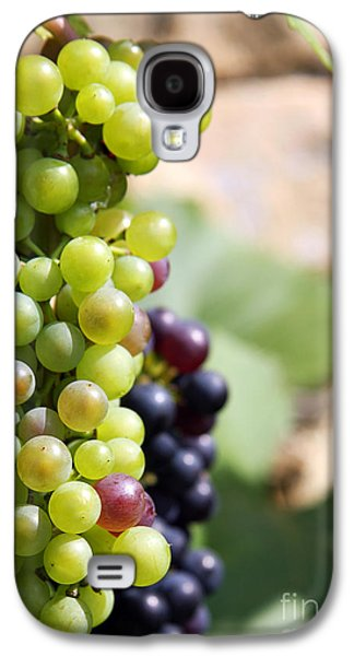 Grapevines Photographs Galaxy S4 Cases - Grapes Galaxy S4 Case by Jane Rix